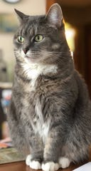 Emily Hendricks and Ahmed Abu Seif are looking for their missing gray striped tabby cat named Kiki. She went missing after an April 1 fire in Wauwatosa.