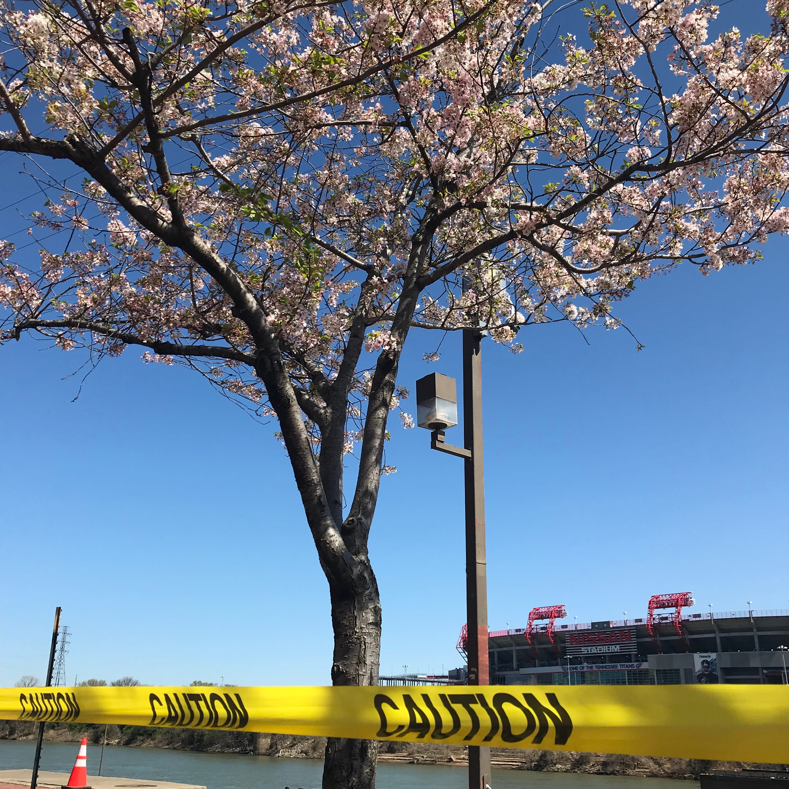 How the city handled permits for cherry tree removal, NFL Draft plans