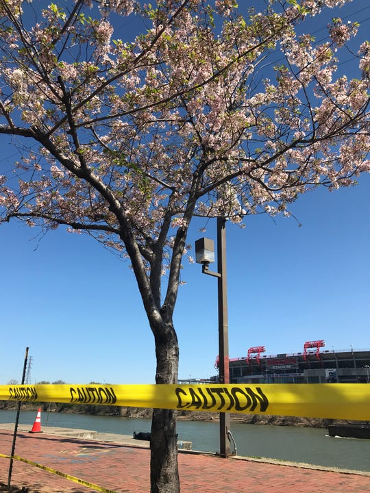 Prep work begins to remove the cherry trees at the end of Broadway on Tuesday, April 2, 2019. The trees are being removed ahead of the NFL Draft.