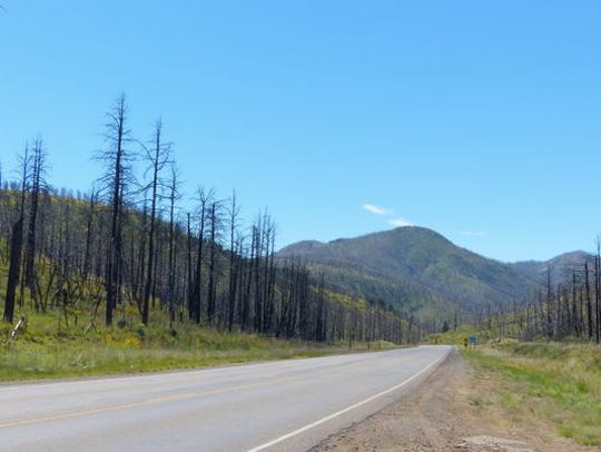 The burn scar from the Little Bear Fire covered miles, leaving charred trees as testament to the destruction.