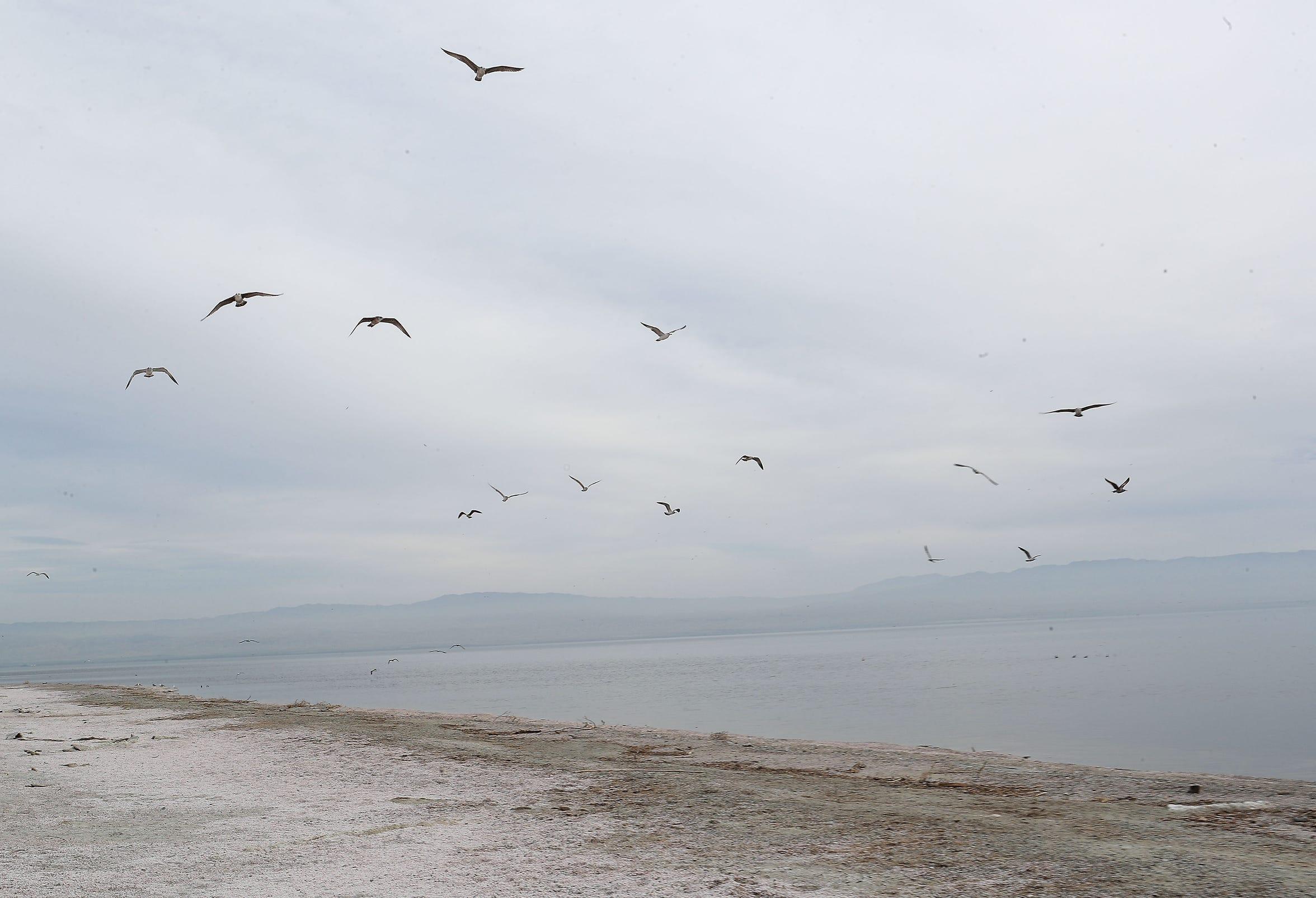 Gulls flies over the Salton Sea near Desert Shores, March 27, 2019.