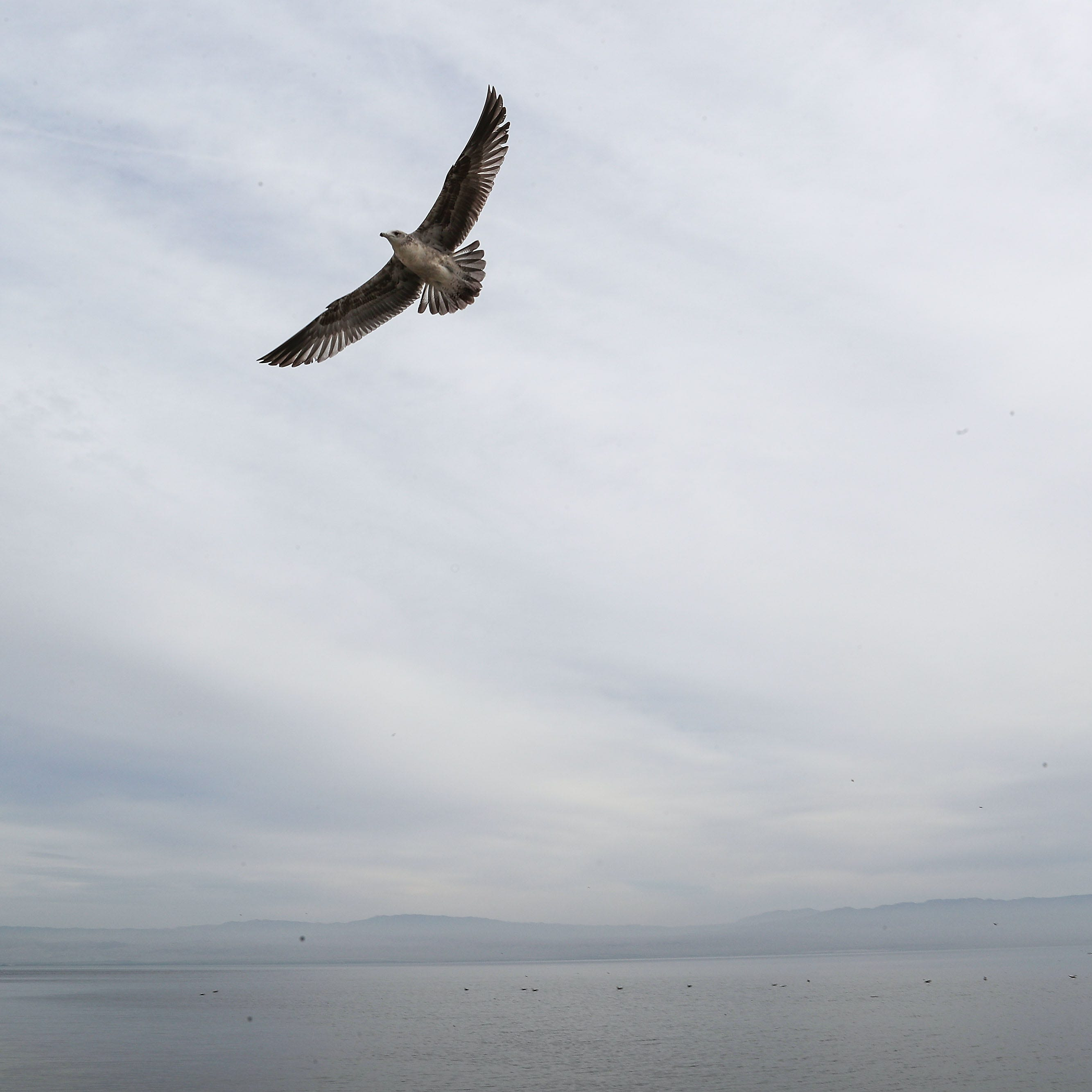 Sunny days, fertilizer runoff and sewage can create toxic bacteria at Salton Sea