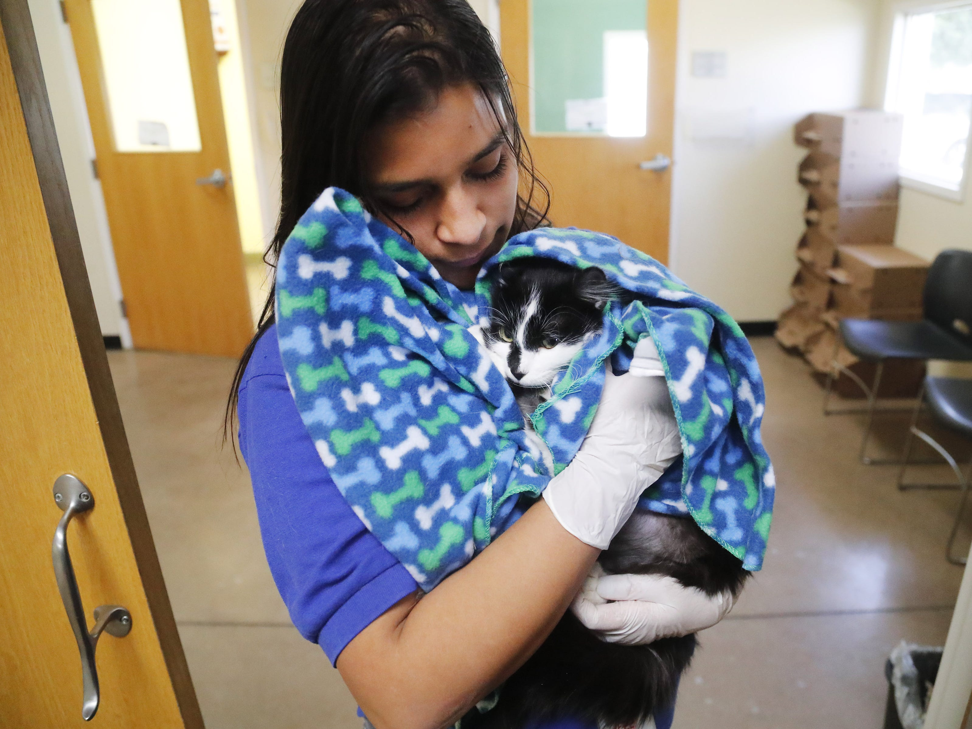Jenny Jimenez, an adoption specialist, holds Minnie at the Arizona Humane Society in Phoenix on April 1, 2019. More than 8,000 dogs and cats have been surrendered in Maricopa County since the start of the year. Minnie was rescued from a hoarding situation.