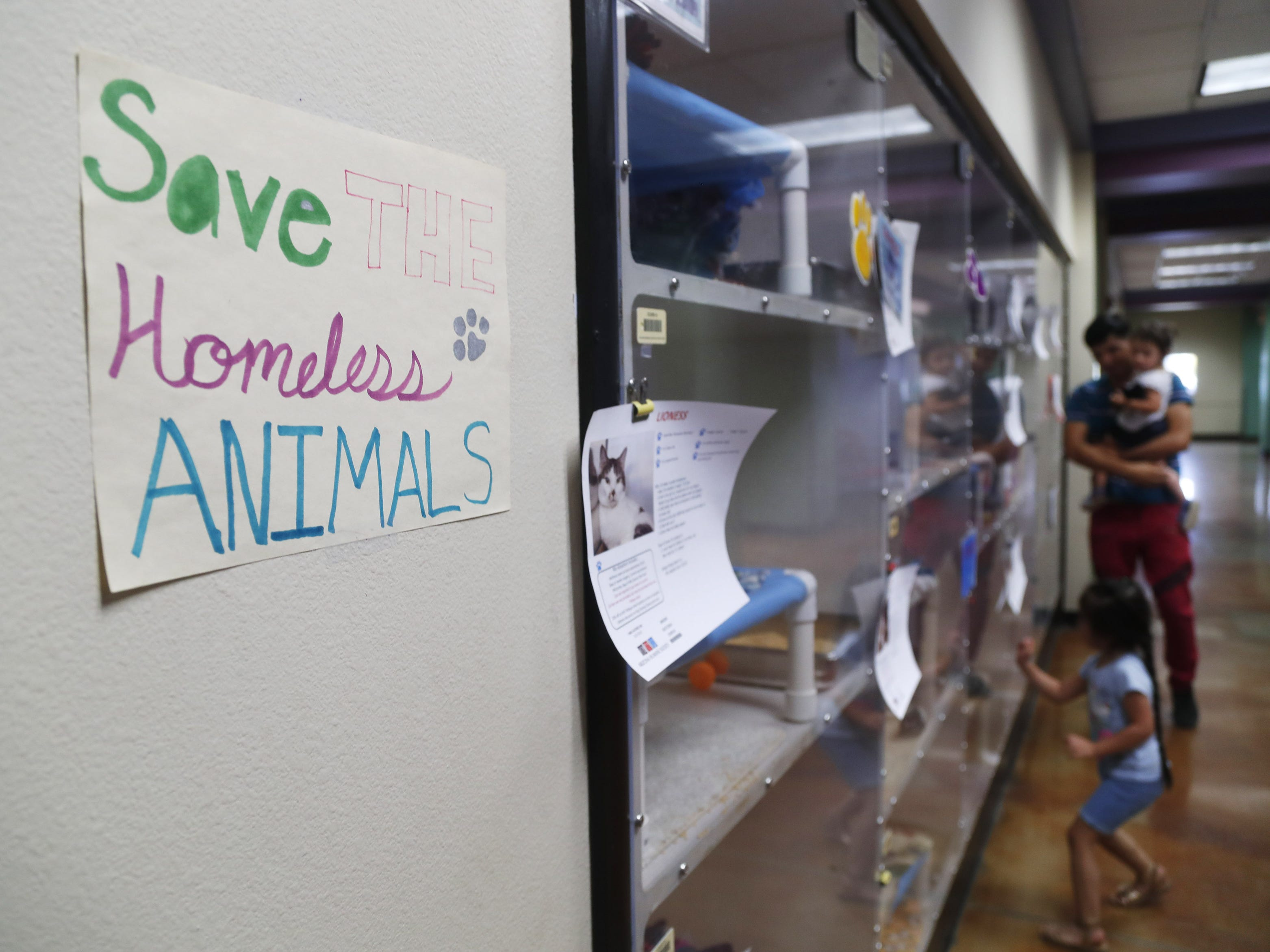 Visitors look at cats for adoption at the Arizona Humane Society in Phoenix on April 1, 2019. More than 8,000 dogs and cats have been surrendered in Maricopa County since the start of the year.