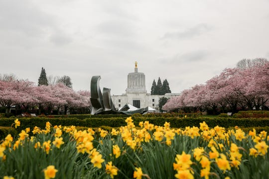 Flowers and cherry blossom trees begin to bloom around the Oregon State Capitol in Salem on April 1, 2019.