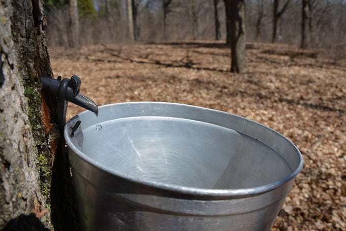 Wisconsin maple syrup producers tapped 750,000 trees in 2018 to produce 225,000 gallons of syrup.