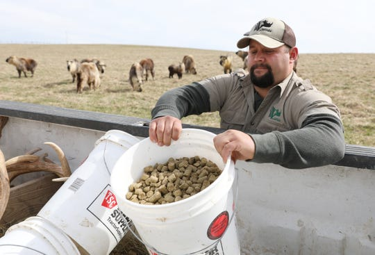 Curt Coleman grabs a bucket of feed for Sichuan takin at The Wilds in Cumberland. Coleman, a McConnelsville native, is a pasture specialist, tasked with taking care of some of The Wilds most iconic species.