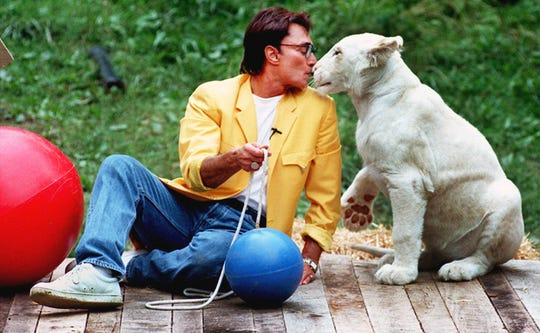 Roy Horn, one half of Siegfried & Roy, plays with 7-month-old white lioness Prosperity, which they donated to the zoo in 1998.