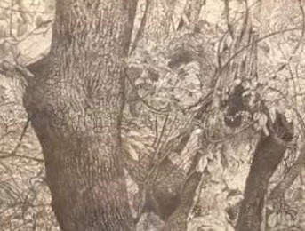 Thom Van Benschoten created this framed woodland art for former Community Press & Recorder president Tom Noonan.