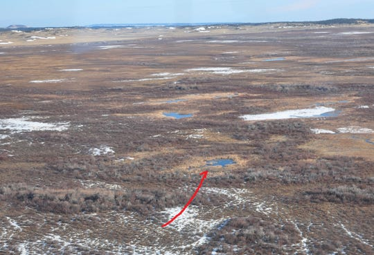 The location in Pine Butte Swamp Preserve where a grizzly bear was observed Tuesday by Montana Fish, Wildlife and Parks.
