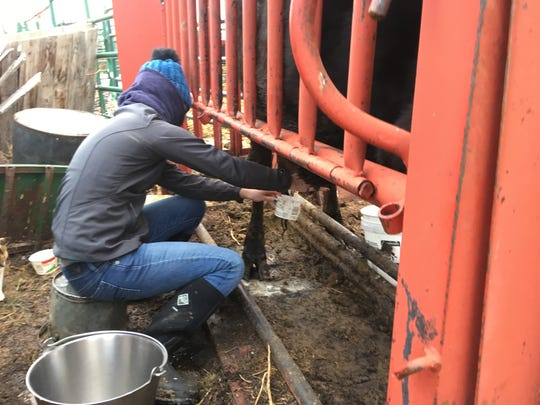 The last time Jillian, a 15-year-old from Oregon,  will ever milk a cow.
