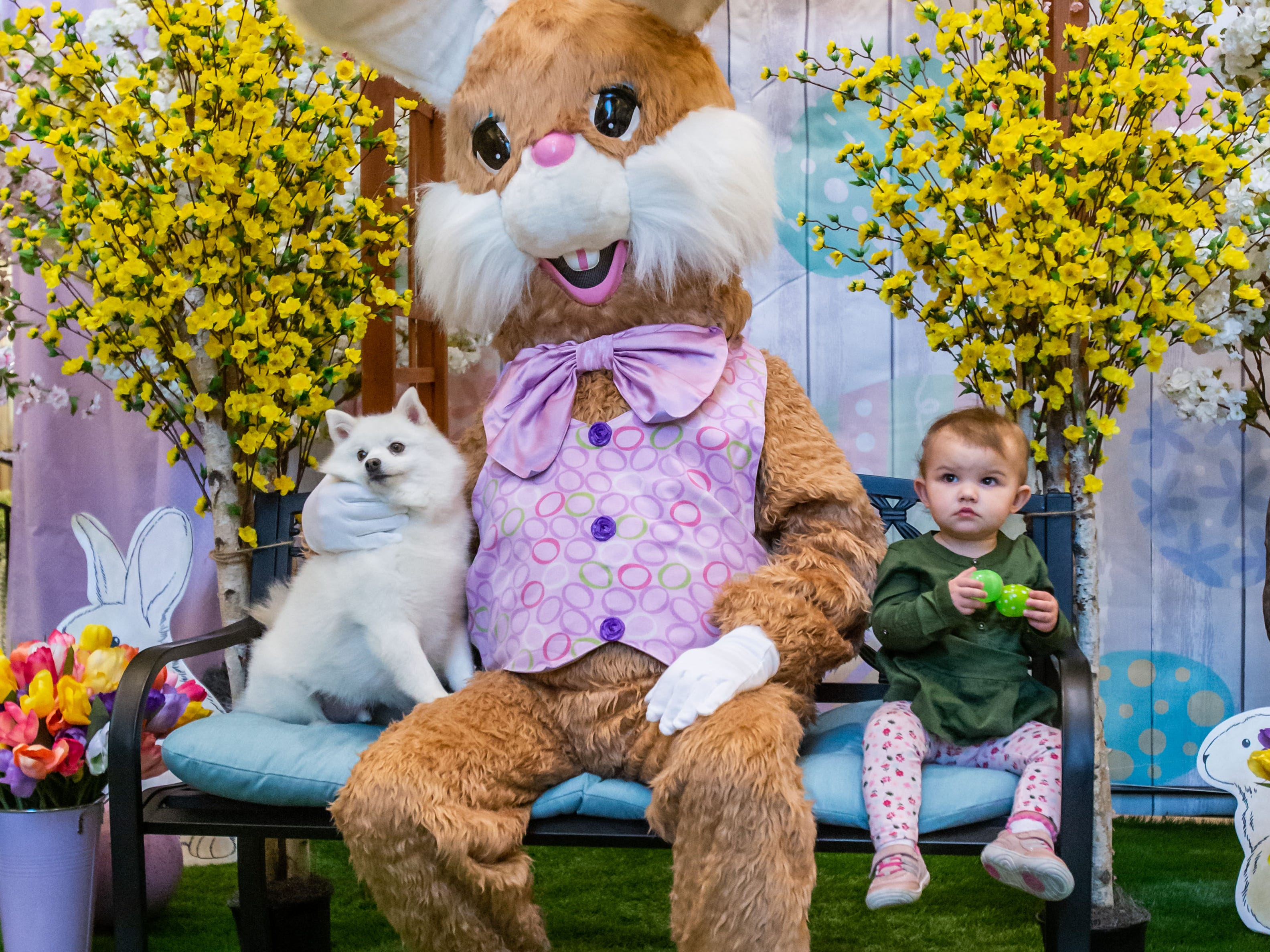 "Eighteen-month-old Kinsley Schalm of Pewaukee and her pup ""Winter"" visit with the Easter Bunny on ""Pet Night"" at Center Court in Brookfield Square Mall on Monday, April 1, 2019. The bunny will be at the mall Monday through Saturday 10am - 9pm and Sunday 11am - 6pm through Saturday, April 20. Pets are welcome to visit from 6-9pm on Monday, April 1, 8 & 15."