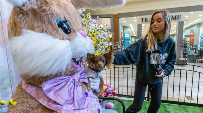 "Madison Fiedler of New Berlin, makes a last minute adjustment to her puppy during a visit with the Easter Bunny on ""Pet Night"" at Center Court in Brookfield Square Mall on Monday, April 1, 2019. The bunny will be at the mall Monday through Saturday 10am - 9pm and Sunday 11am - 6pm through Saturday, April 20. Pets are welcome to visit from 6-9pm on Monday, April 1, 8 & 15."
