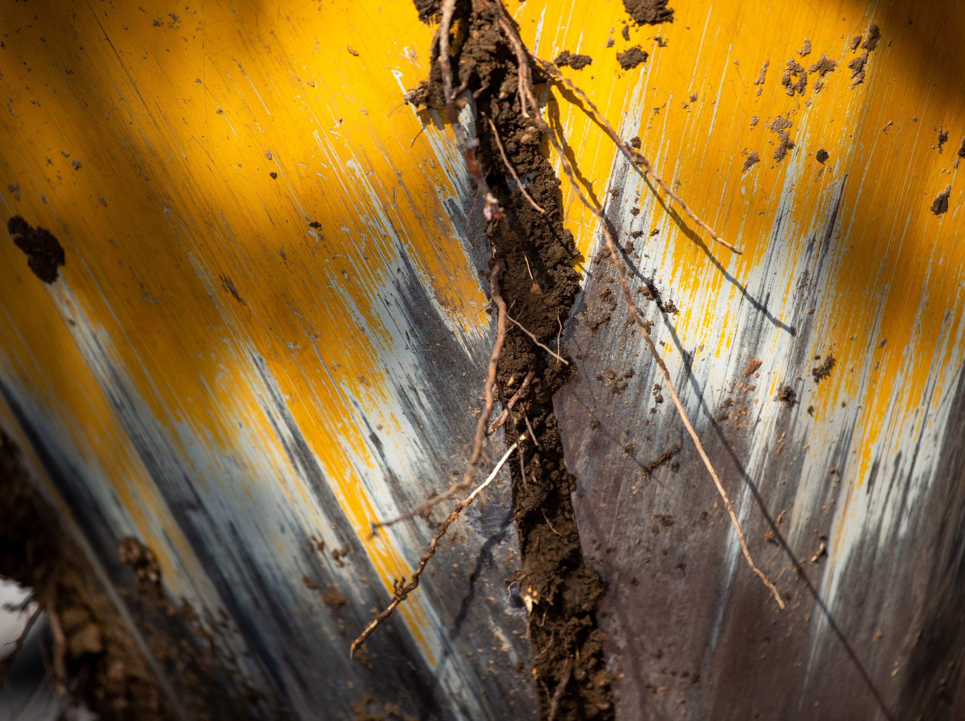 Roots from a Yoshino Cherry tree stick out during relocation along the riverfront Wednesday, April 3, 2019, in Nashville, Tenn. The City is transplanting the trees after protest of chopping the trees down to make room for a giant stage for the upcoming NFL Draft.