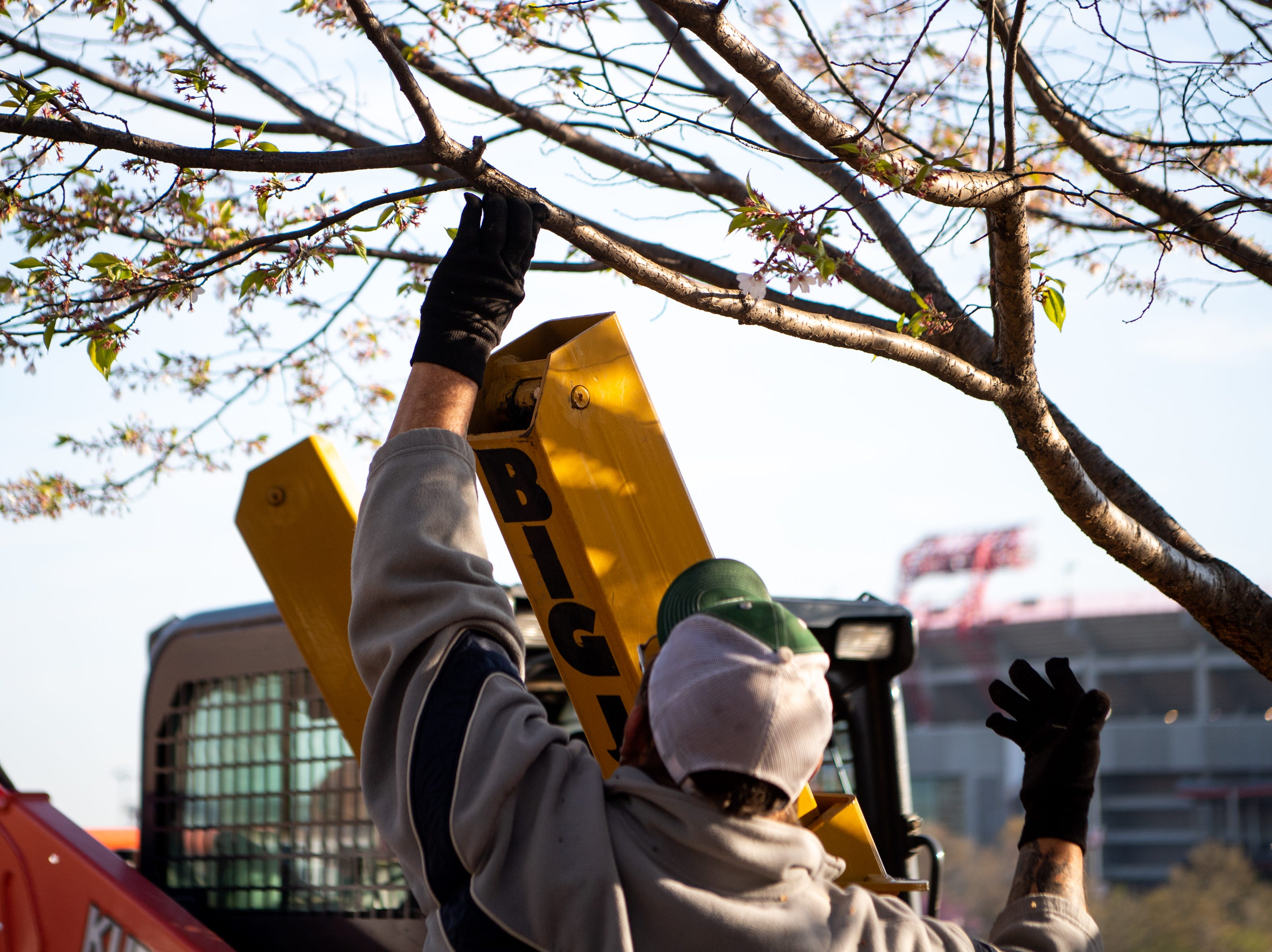 Metro Parks and Recreation workers move branches of a Yoshino Cherry tree to avoid damage during its relocation along the riverfront Wednesday, April 3, 2019, in Nashville, Tenn. The City is transplanting the trees after protest of chopping the trees down to make room for a giant stage for the upcoming NFL Draft.