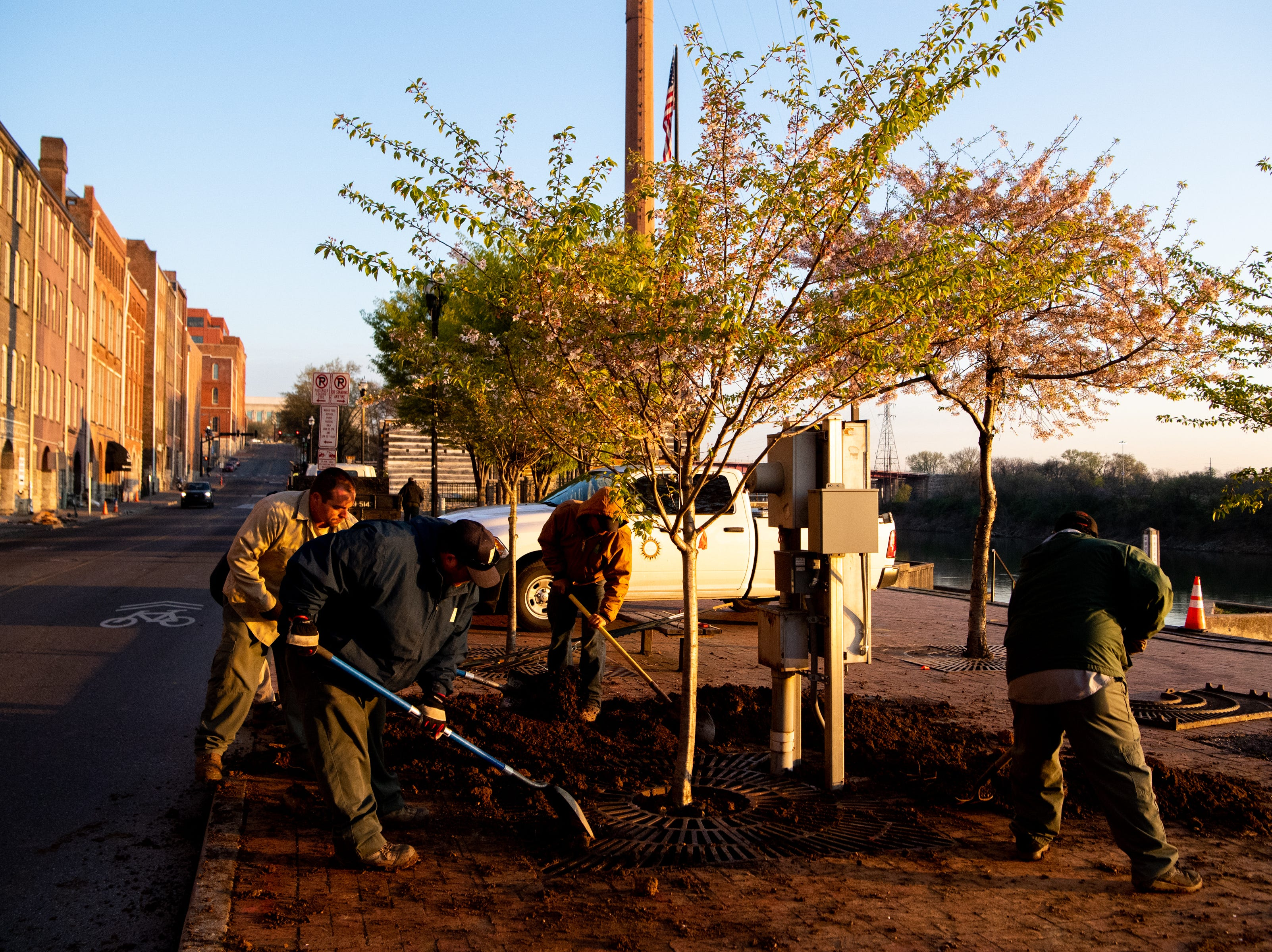 Metro Parks and Recreation workers place dirt around a Yoshino Cherry tree along the riverfront Wednesday, April 3, 2019, in Nashville, Tenn. The City is transplanting the trees after protest of chopping the trees down to make room for a giant stage for the upcoming NFL Draft.