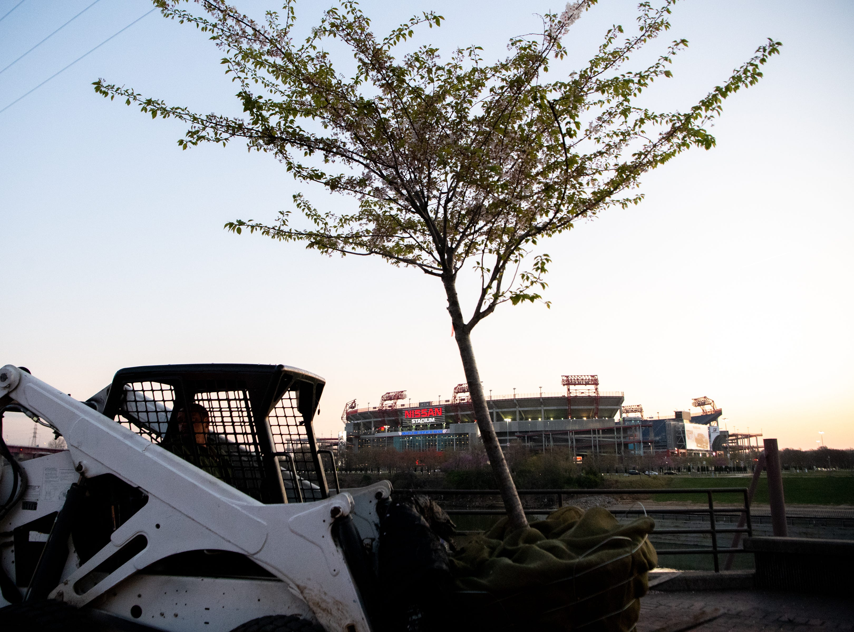 Metro Parks and Recreation workers move a Yoshino Cherry tree along the riverfront Wednesday, April 3, 2019, in Nashville, Tenn. The City is transplanting the trees after protest of chopping the trees down to make room for a giant stage for the upcoming NFL Draft.