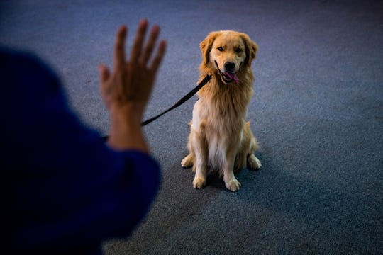 Volunteer and senior handler Karen Rakow trains Jeffrey, a 2-year-old golden retriever, to sit and lie down at the Golden PAWS Assistance Dogs facility in Naples on Wednesday, April 3, 2019.