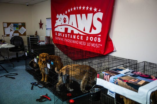 Service dogs in training at Golden PAWS Assistance Dogs facility in Naples on Wednesday, April 3, 2019. In the facility, most of the operations happen in one room.