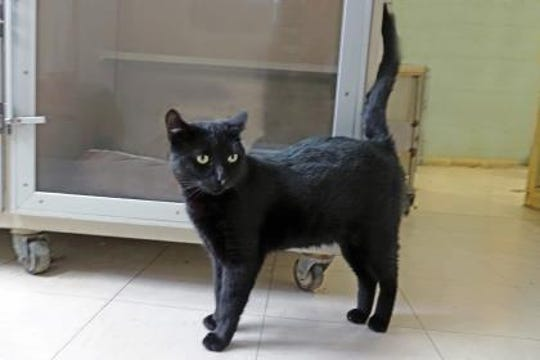 Wilson is a 2 1/2-year-old neutered male. He was found on a porch in Alto.