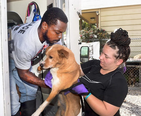 Volunteers from the St. Landry Parish Animal Shelter load a young dog onto a transport van for its trip to Kalamazoo, Michigan for a new life at a non-kill ASPCA shelter.