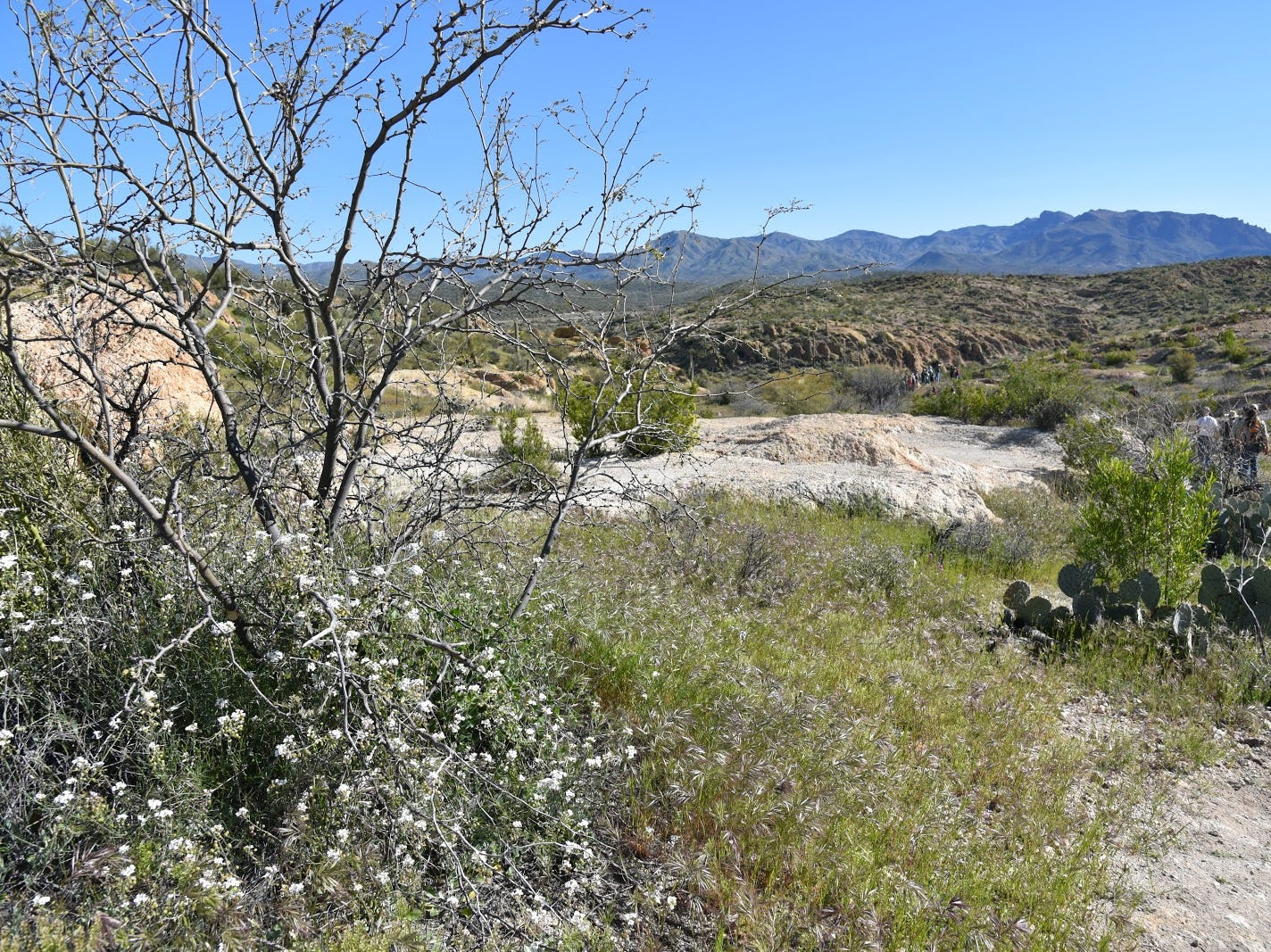Wildflowers grow among outcroppings of volcanic ash in Arnett Canyon.