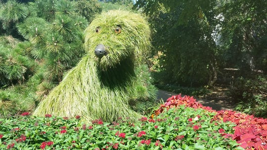 Interesting plant sculptures, like this dog, can be found throughout the Atlanta Botanical Garden.