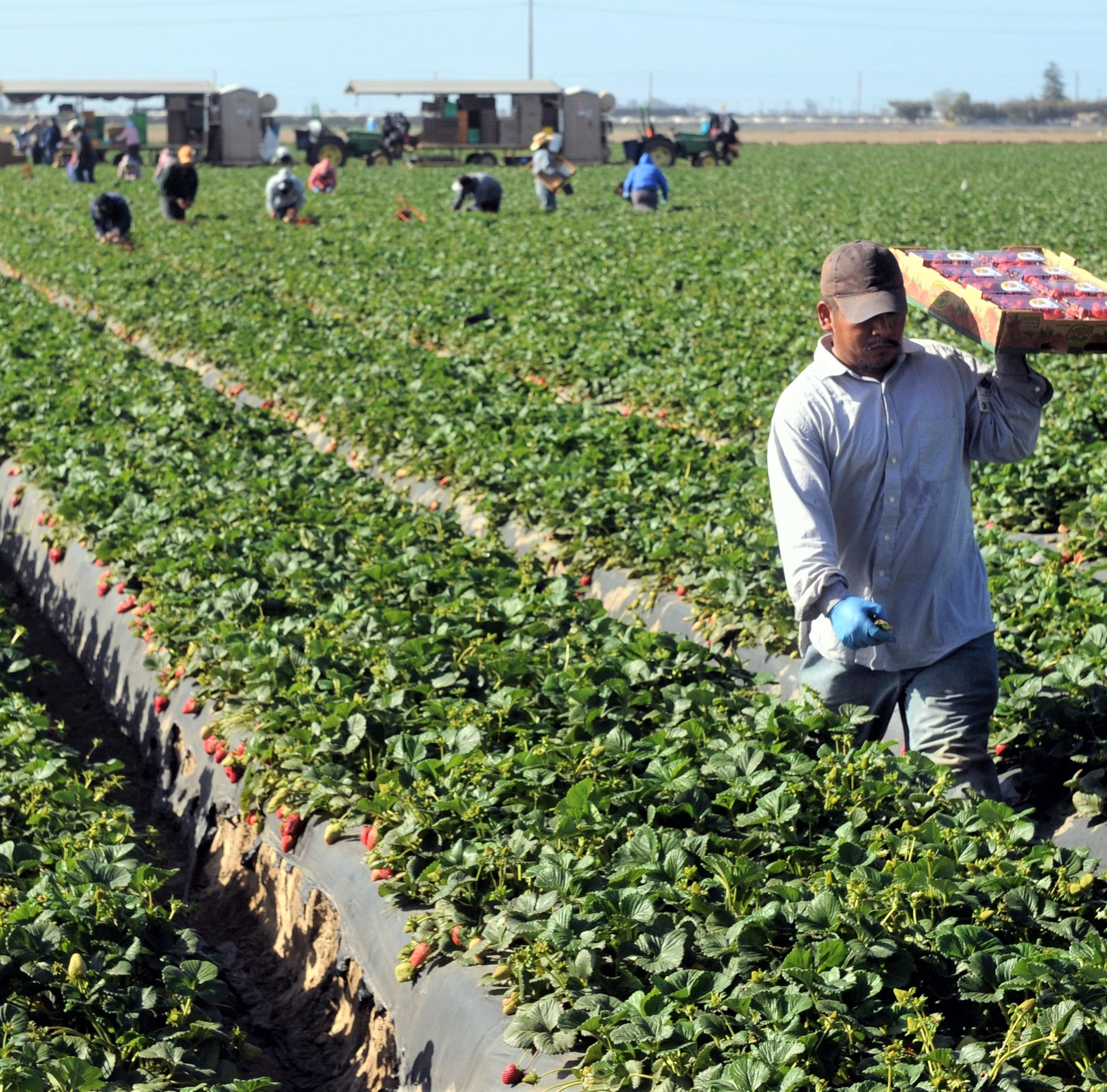 How Mexican border closure could hurt or help Ventura County farming operations