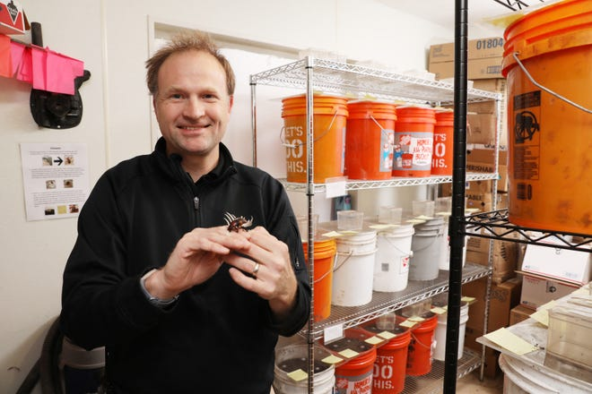 Dr. Stephen Spear holds an Amerian Burying Beetle in The Wilds' burying beetle facility. The orange buckets around him hold burying beetles and their larva.
