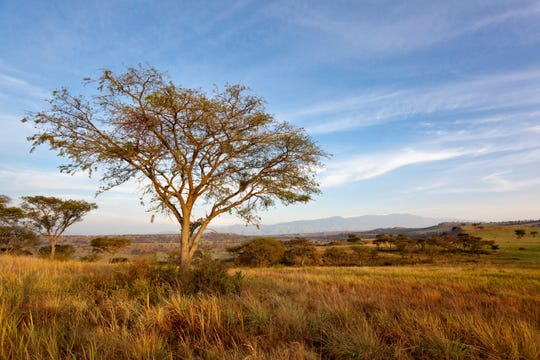 An American tourist in Uganda and a local guide were ambushed and kidnapped at Queen Elizabeth National Park in Uganda.