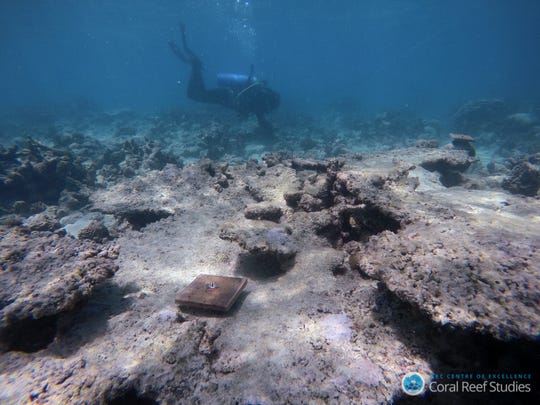 The damage caused to the Great Barrier Reef due to global warming has made it much harder for the corals to recover.