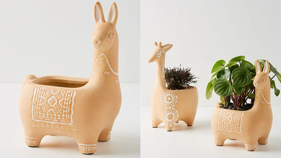The Penelope Pot is absolutely perfect for herbs, cat grass, succulents, or anything, really.