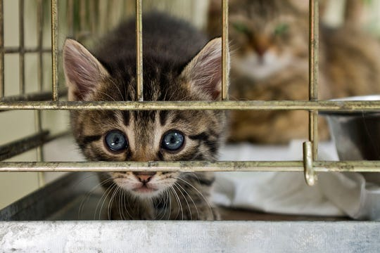 The U.S. Department of Agriculture said it will no longer use cats in taxpayer-funded research studying foodborne illness.