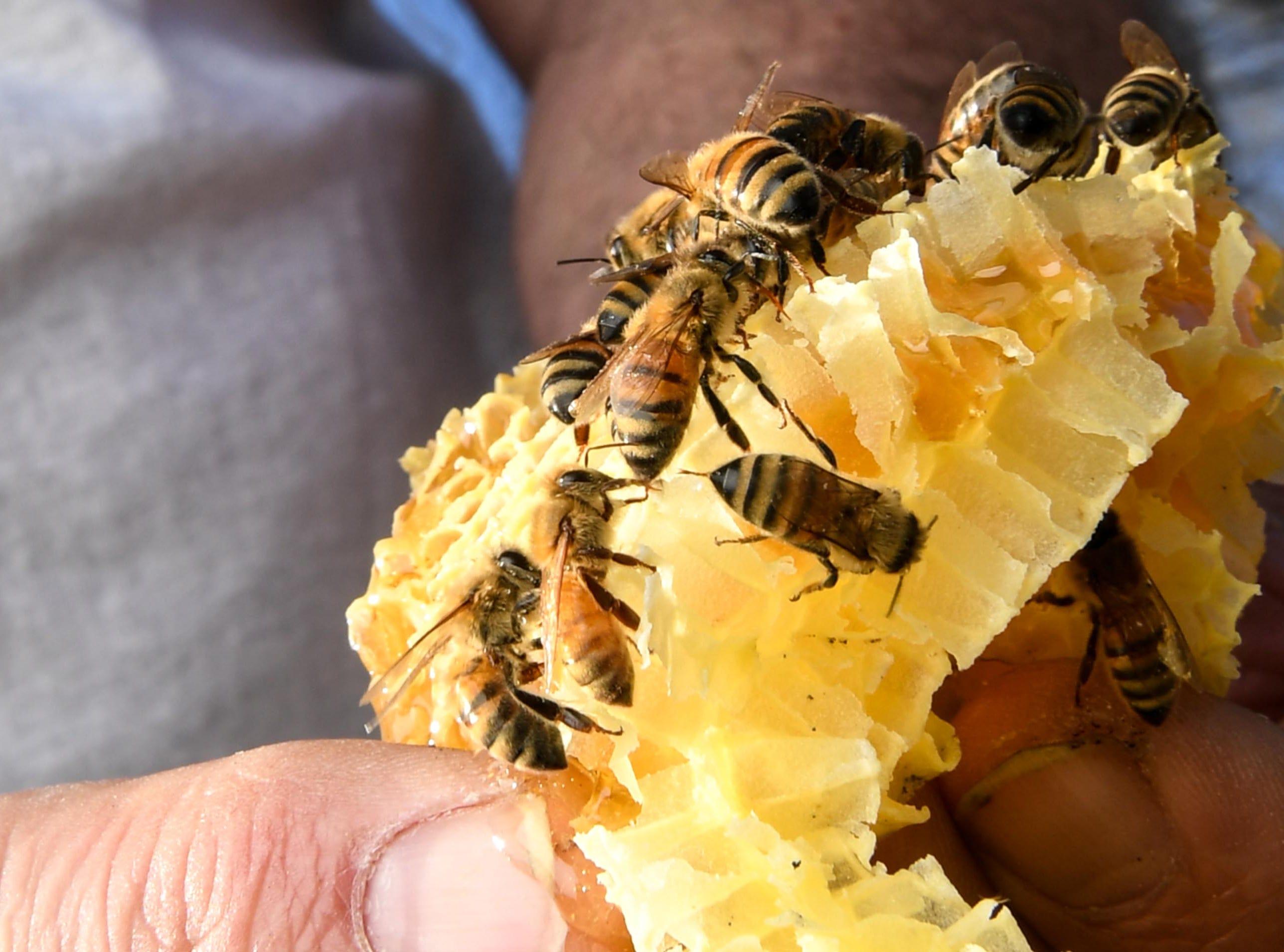 Kerry Owen, owner of Bee Well Honey in Pickens.