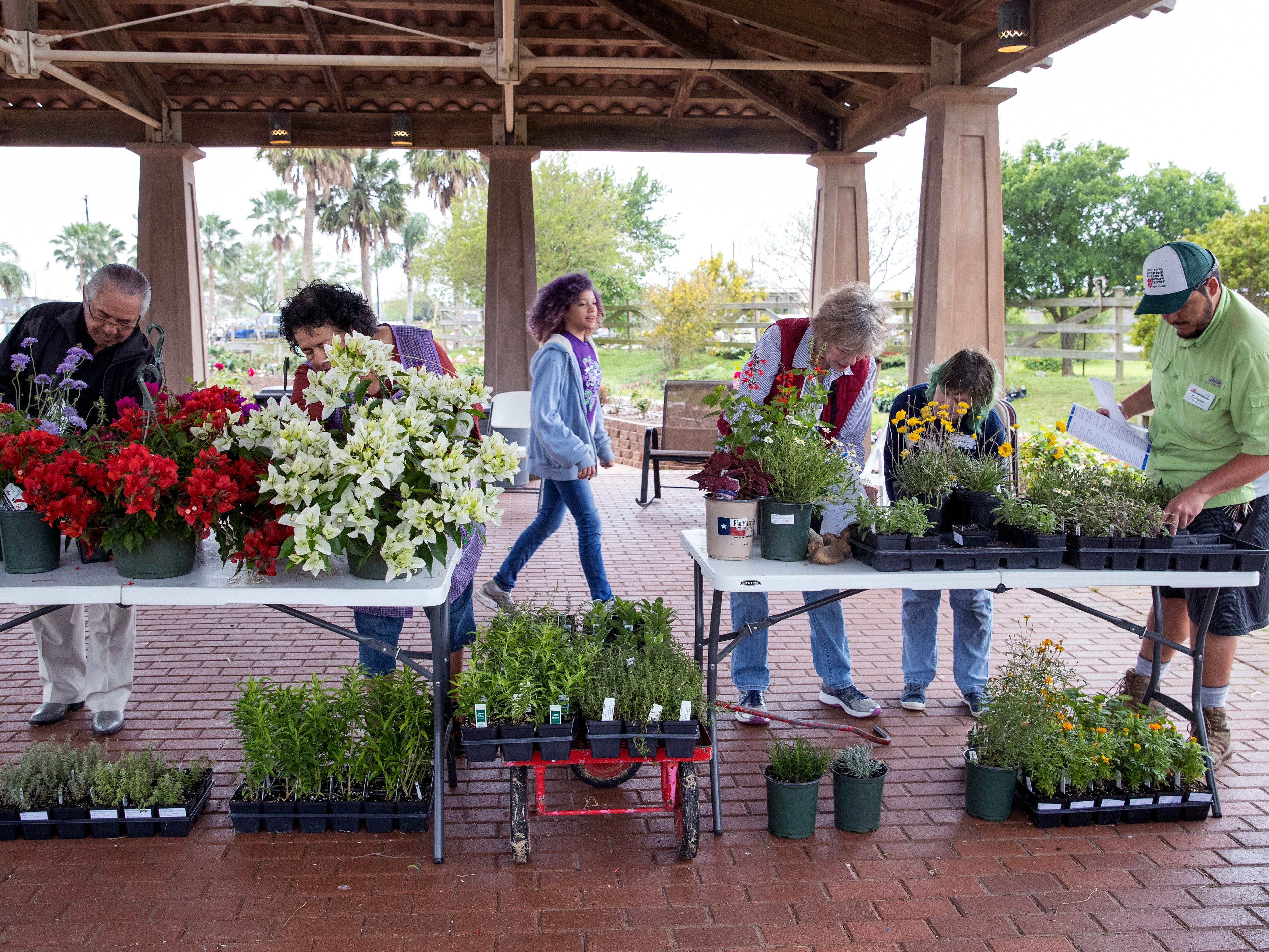 Volunteers Felix Ramirez (from left), Oralia Ramirez, Rory Diaz, 12, Karen Easton, Candy Tidmore, and Brandon Rodriguez, a Texas A&M University-Corpus Christi student, price plants on Thursday, April 4, 2019 in preparation for the annual Big Bloom which is Saturday at the South Texas Botanical Gardens & Nature Center. Thousands of varieties of plants have been ordered from wholesalers for the event. Nueces Master Gardeners will be on hand to help visitors pick their plants and answer care questions.