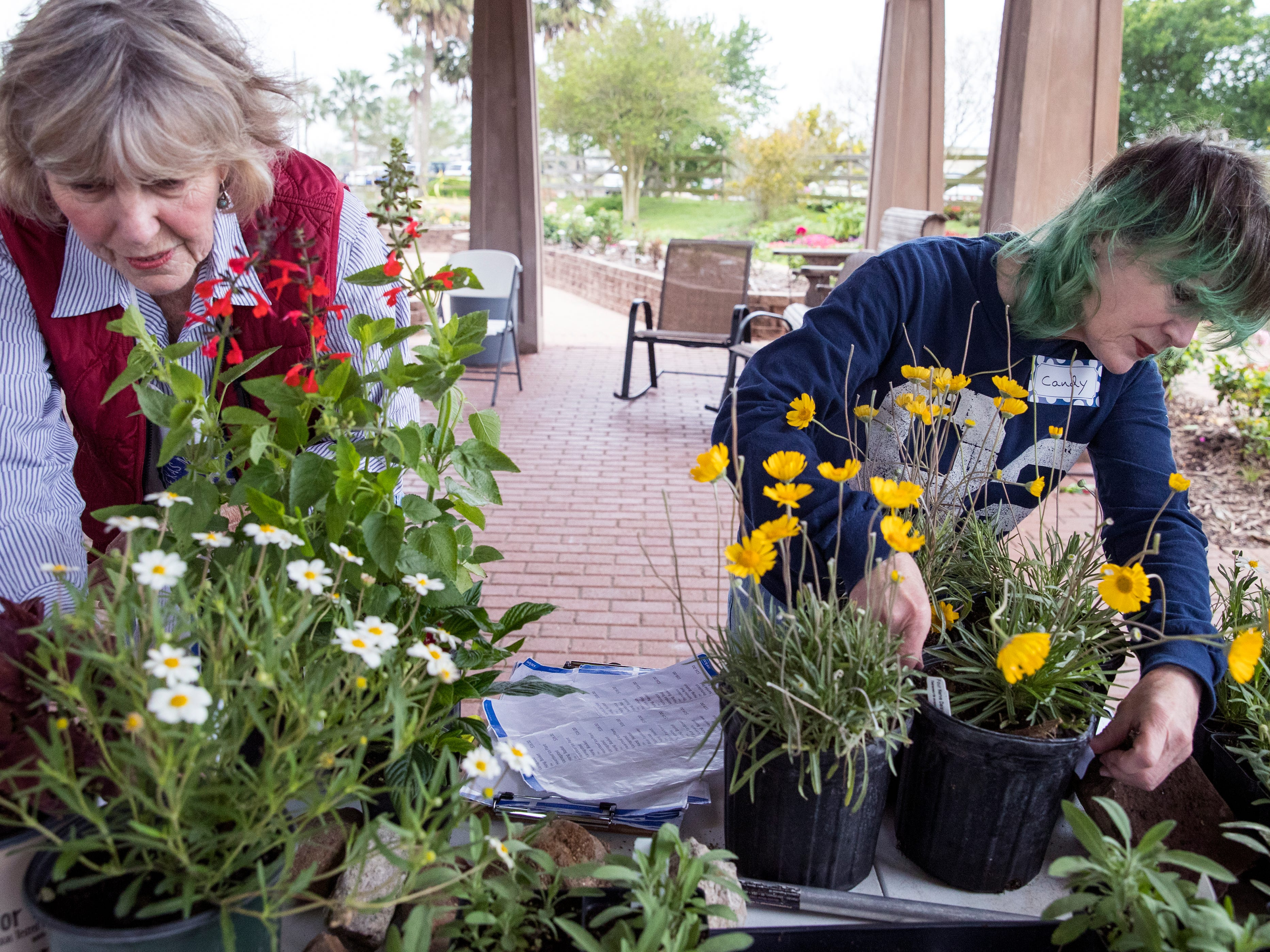 Volunteers Karen Easton (left) and Candy Tidmore price plants on Thursday, April 4, 2019 in preparation for the annual Big Bloom which is Saturday at the South Texas Botanical Gardens & Nature Center. Thousands of varieties of plants have been ordered from wholesalers for the event. Nueces Master Gardeners will be on hand to help visitors pick their plants and answer care questions.