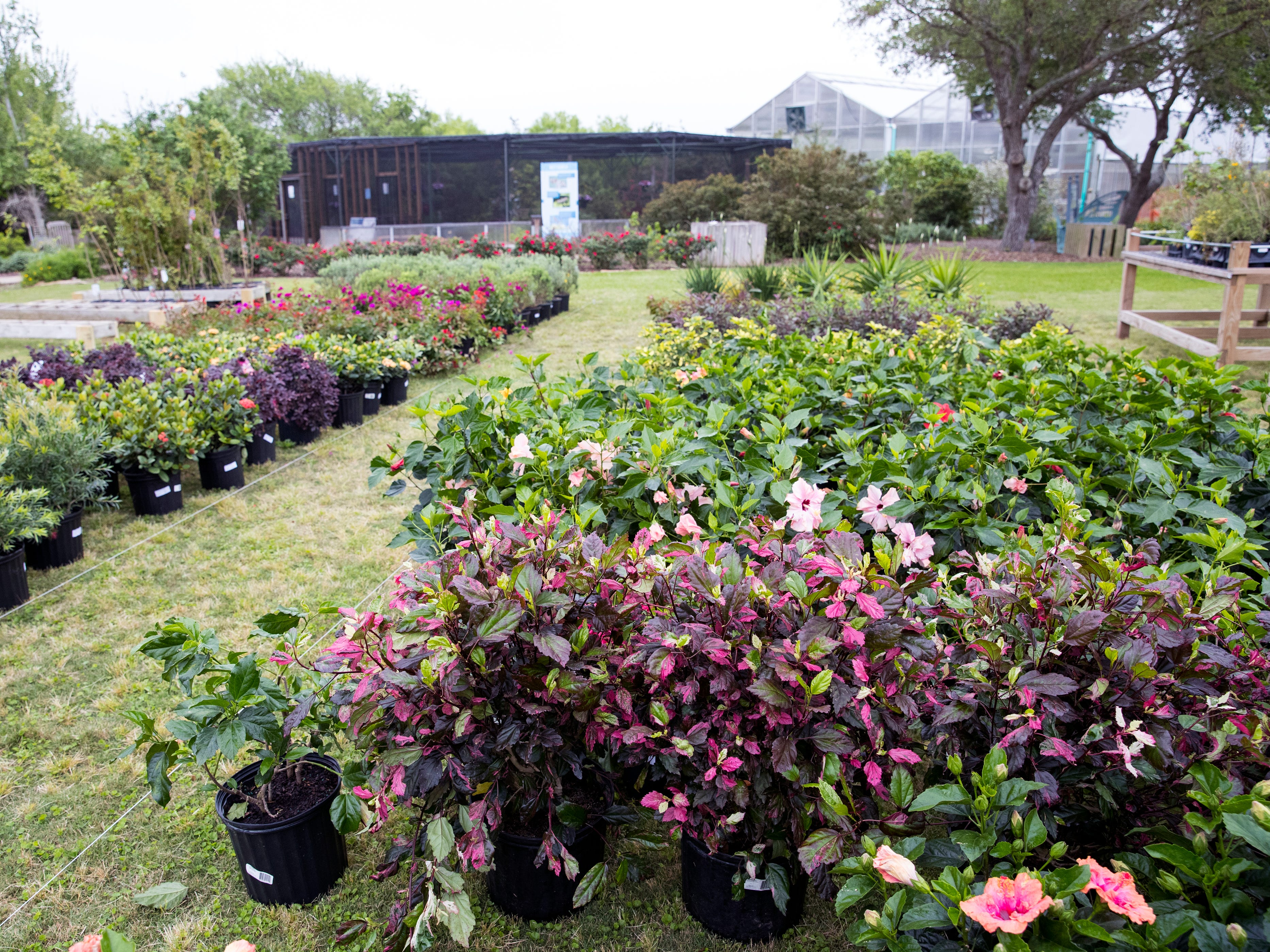 The annual Big Bloom is Saturday at the South Texas Botanical Gardens & Nature Center. Thousands of varieties of plants have been ordered from wholesalers for the event. Nueces Master Gardeners will be on hand to help visitors pick their plants and answer care questions.