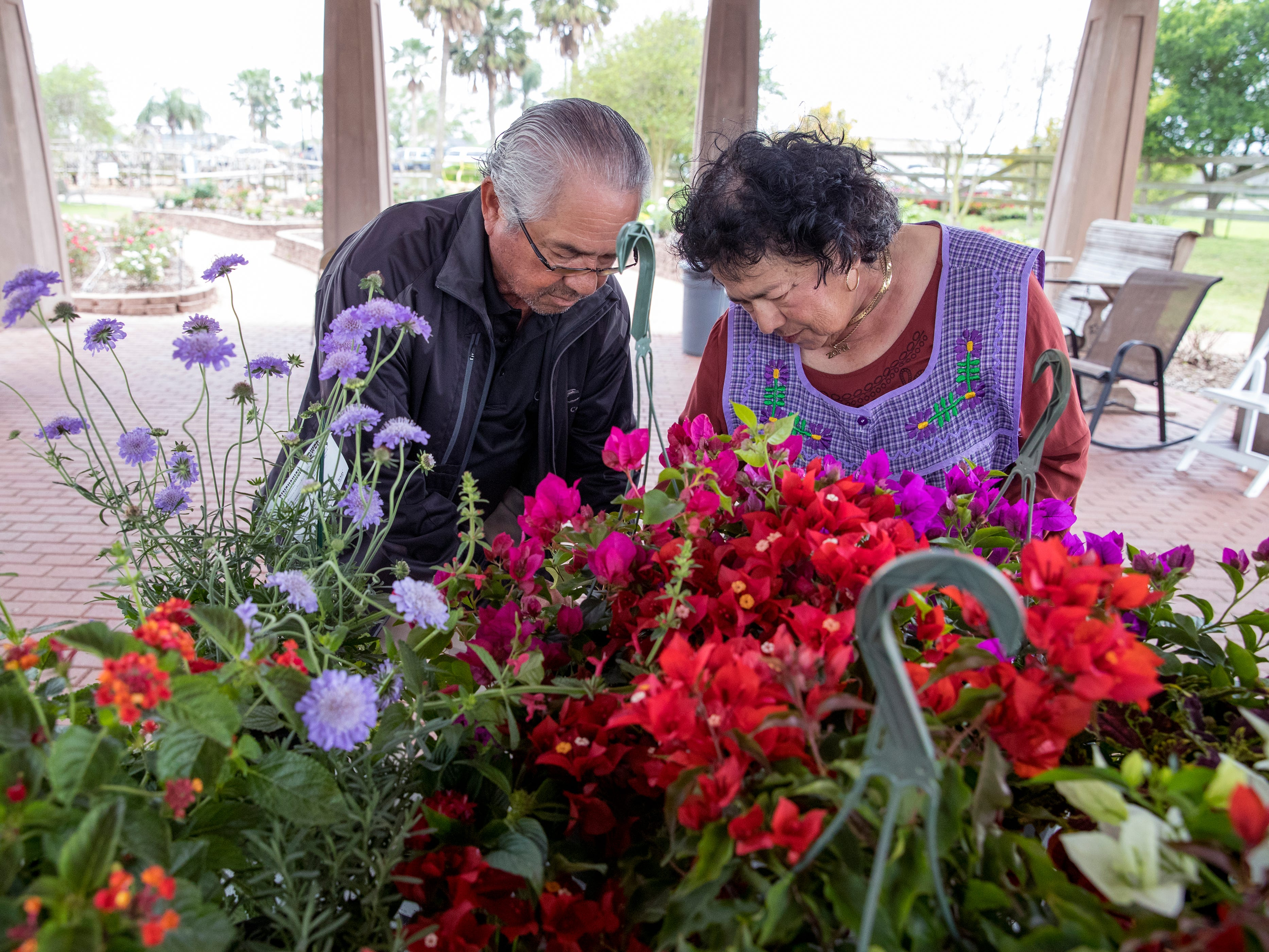 Volunteers Felix Ramirez and Oralia Ramirez price plants on Thursday, April 4, 2019 in preparation for the annual Big Bloom which is Saturday at the South Texas Botanical Gardens & Nature Center. Thousands of varieties of plants have been ordered from wholesalers for the event. Nueces Master Gardeners will be on hand to help visitors pick their plants and answer care questions.