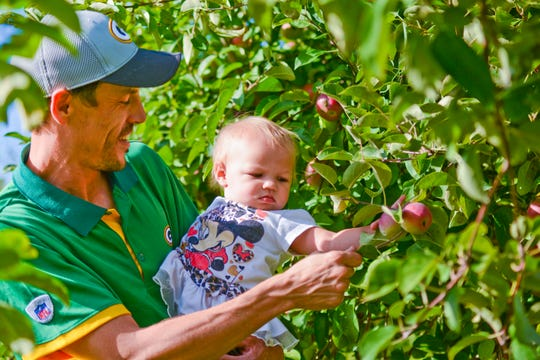 Hobart residents Jesse Timm and his 1-year-old daughter Tia pick apples at the Oneida Big Apple Fest in 2016.