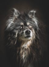 Looking for love in all the paw places? Senior dogs have the most to offer. Here's why you should adopt and not shop, April 10, 2019.