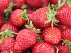 Pick-your-own strawberries: Cool spring delays harvest in greater Green Bay