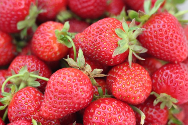 Strawberries are one of the most popular fruits around.