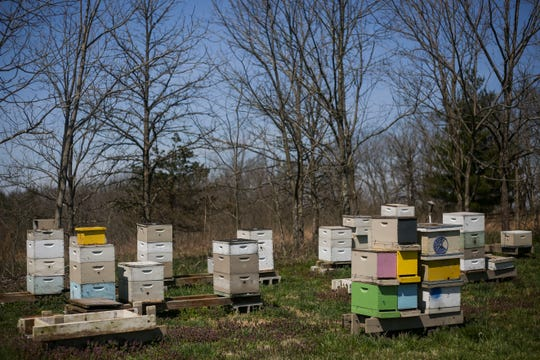 Stacks of beehives become active as the temperature rises in the Hosey Honey bee yard in Midway, Ky. on Wednesday, April 3, 2019. Hosey Honey is a small family run honey company, their Hosey's Queen's Triple Crown honey is used in the sweetener in the $1,000 Woodford Reserve Kentucky Derby mint julep.