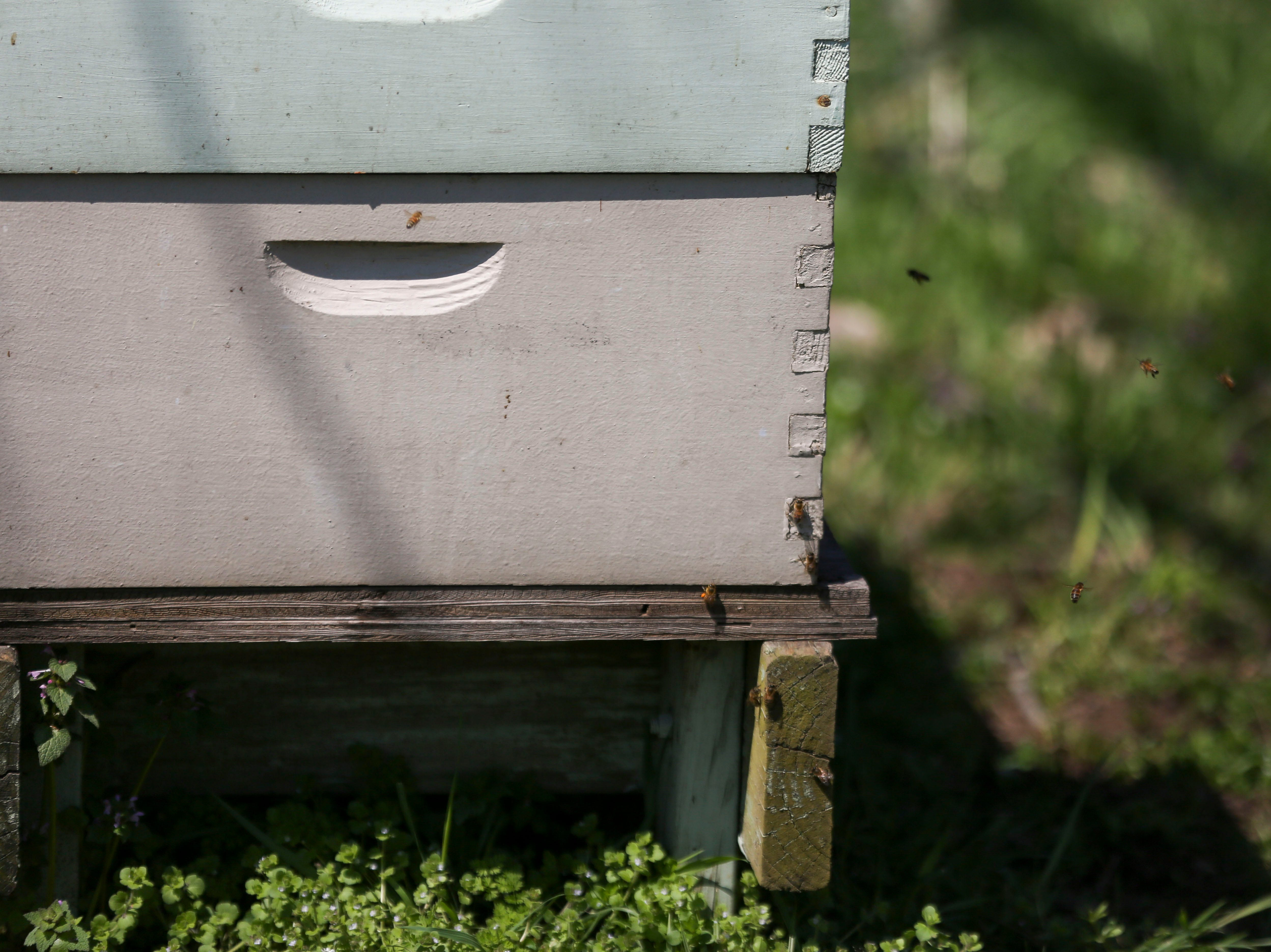 Bees fly around hives in the Hosey Honey bee yard in Midway, Ky. on Wednesday, April 3, 2019. Hosey Honey is a small family run honey company, their Hosey's Queen's Triple Crown honey is used in the sweetener in the $1,000 Woodford Reserve Kentucky Derby mint julep.