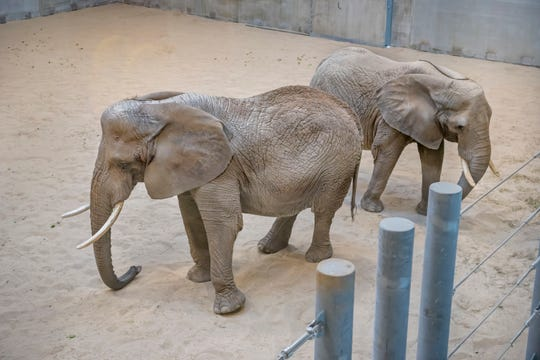 """The Milwaukee County Zoo's new elephant exhibit will open to visitors Saturday, May 4, with a """"grand reveal"""" and opening day activities at 10 a.m."""