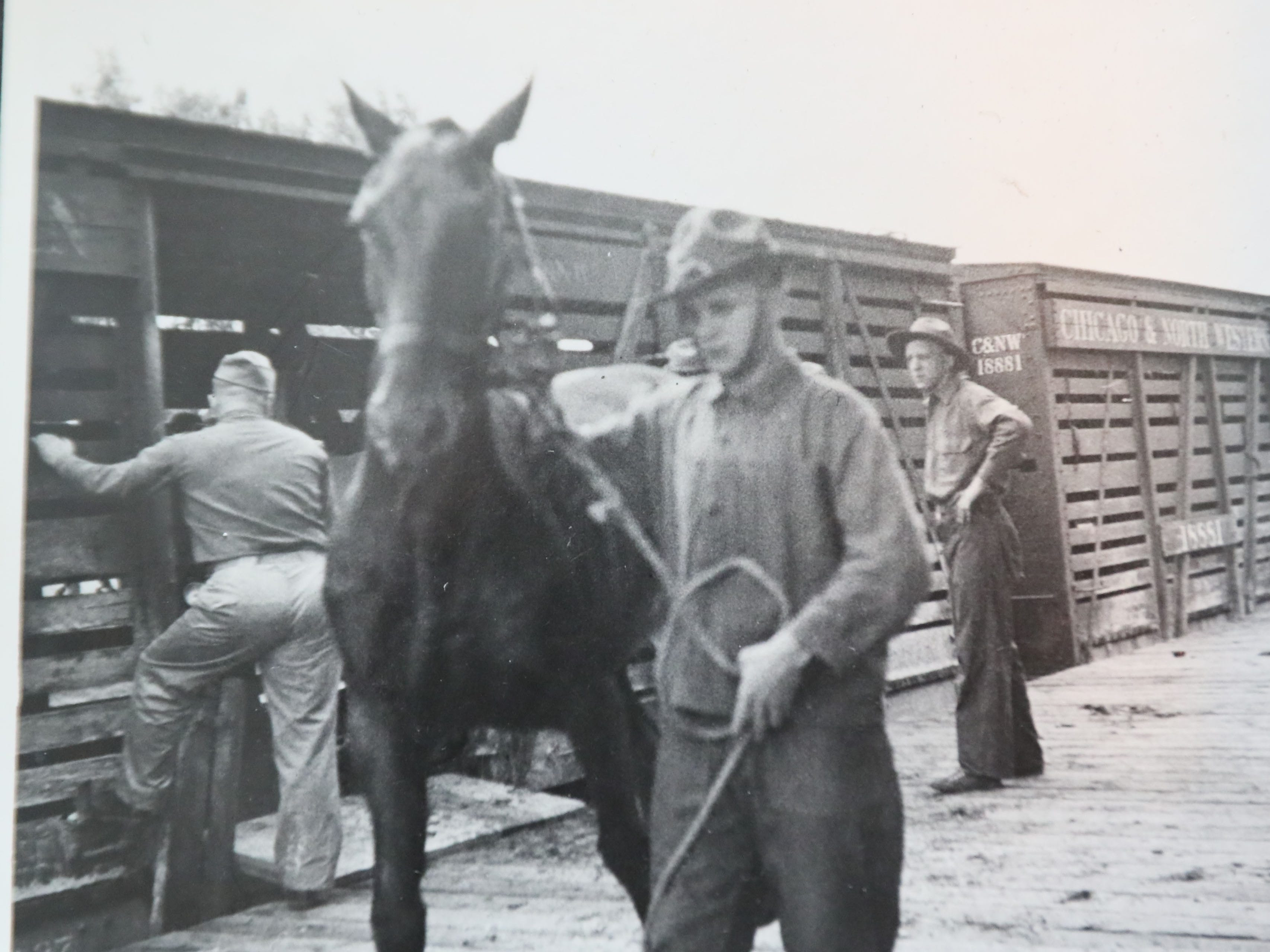 A photo of the 105th Cavalry unloading horses.