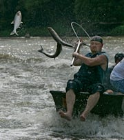 In Illinois, a man tries to net a silver carp. A University of Michigan study says Asian carp, including silver carp, could find plenty of food in Lake Michigan if they reach the lake.
