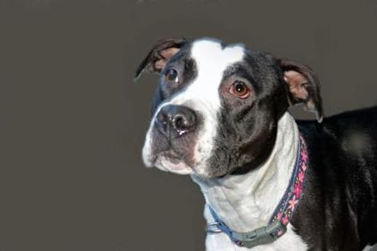 Dottie loves going out for daily walks, playing with toys and eating her favorite snacks.