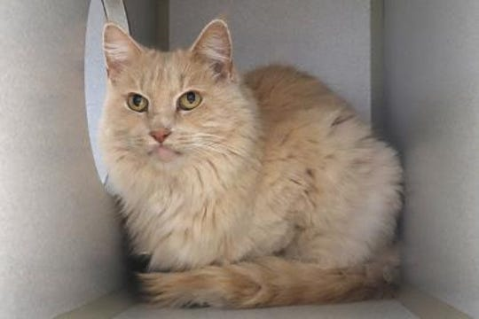 Walt is a 6-year-old neutered male., who weighs about 10 pounds.