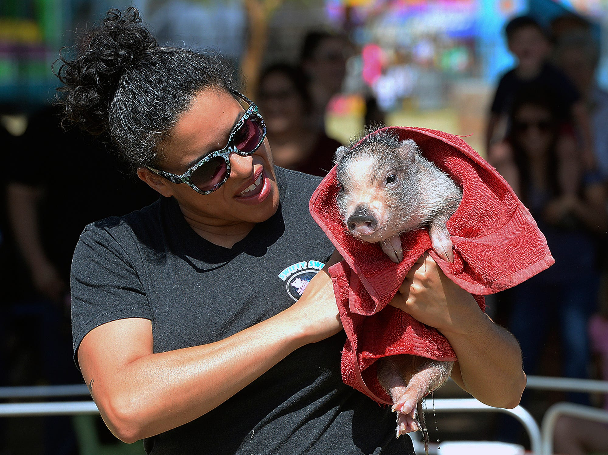 """Kelsie Adkisson wraps Swifty the swimming pig in a towel after the pig jumped into the """"pool"""" for a quick sprint to the other end during a Swifty Swine Racing Pigs heat race, Wednesday, April 3, 2019, at the annual Yuma County Fair, in Yuma, Ariz."""